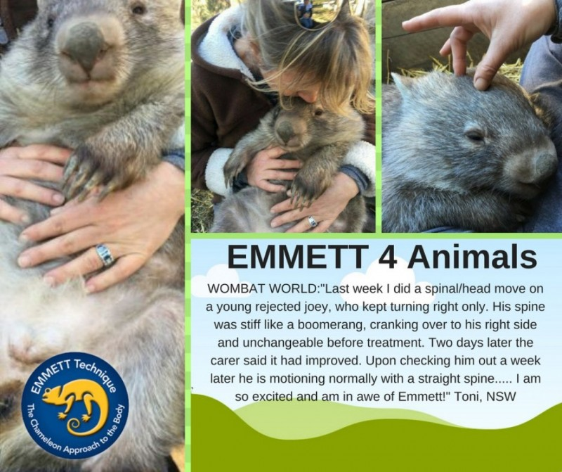 EMMETT 4 Dogs (and Wombats)